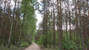 Lasy nad Pilicą